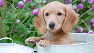 Wann Sind Möbel Am Günstigsten : wann hundewelpen am niedlichsten sind ~ Bigdaddyawards.com Haus und Dekorationen