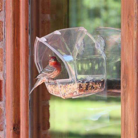 50 magical bird feeders that will attract birds in your garden
