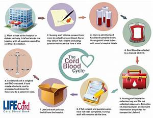 LifeCord Cord Blood Bank - The Cord Blood Cycle