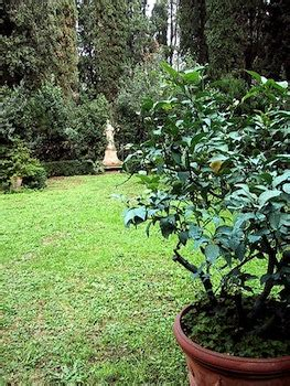 coltivare agrumi in vaso pianta ornamentale agrumi ornamentali in fitocella piante