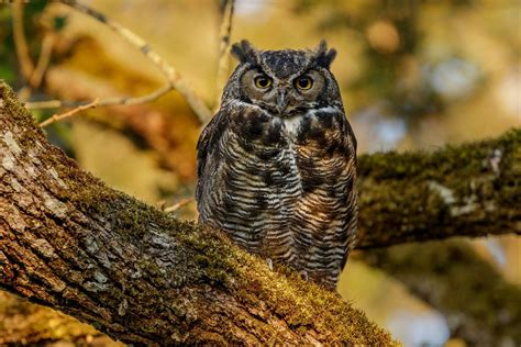Home Interior Owl Picture #0