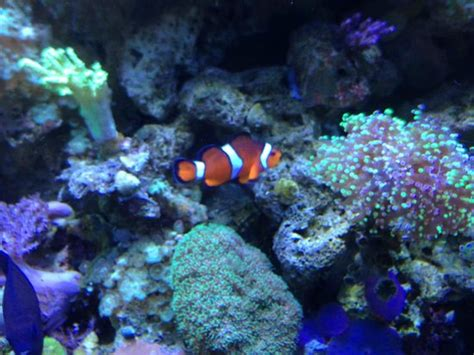 sea minnesota aquarium underwater walk through tunnels picture of sea minnesota aquarium bloomington tripadvisor