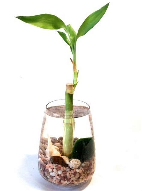 bamboo interior design ideas pot vase asia water lucky bamboo plant room interior design