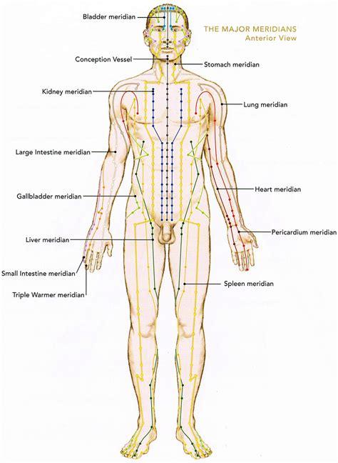 Vital Organs Diagram Deer Vital Organs Diagram Wire Diagrams