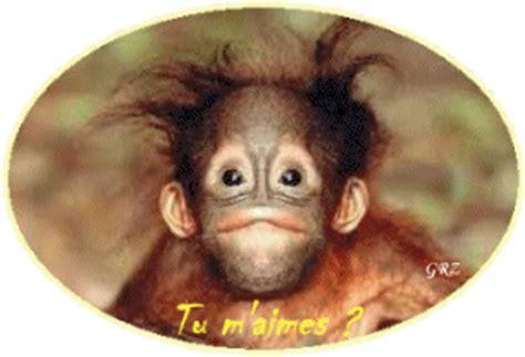 immagini  gif animate  scimmie innamorate gifmania