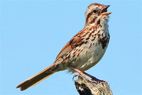 types of bird sounds bird noises