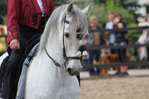 horse spain riding andalusia places holiday go andalusian