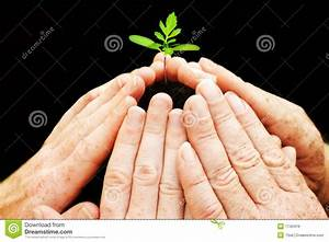 Six Hands Around Small Seedling Stock Image - Image of ...
