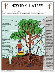 Tree Planting And Care