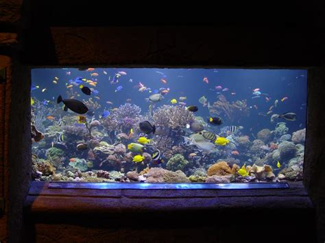 fish aquariums beautiful aquariums aquarium recipeapart