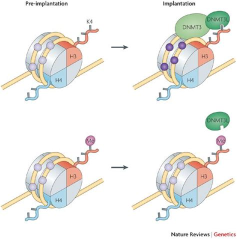 Modification Histone by Linking Dna Methylation And Histone Modification Patterns