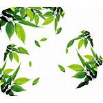 Leaves Clipart Leaf Icon Pinclipart Transparent