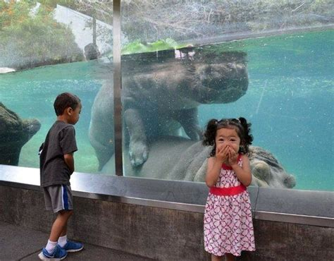 zoo hippo mating funny down dirty low fails yourself joke times animals picdump 1177 memes kid bargained visitors got than