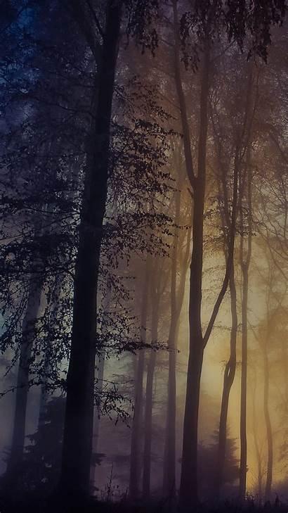 Croatia Medvednica Forest Spotlight Windows Foggy Sunlight