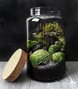 Acheter Terrarium Plante : woodland mousse terrarium en verre grand pot de plante etsy ~ Teatrodelosmanantiales.com Idées de Décoration