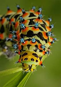 Cool Pictures of Alien Insects - Insect Macro Photography ...