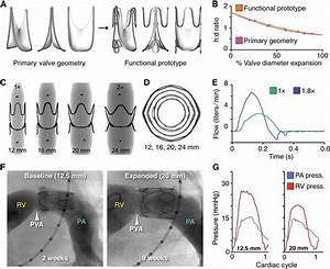 Functional Prototype Design And In Vivo Proof Of Concept