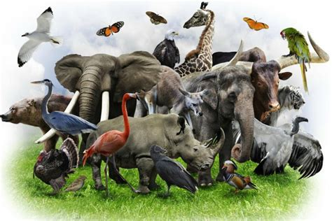 la sexta extincion estamos al borde de otra extincion