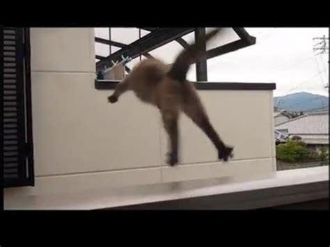 hilarious cat jump fails compilation  youtube