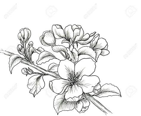 Novel Dessins Fleurs Et Arbres Arbre Japonais Dessin