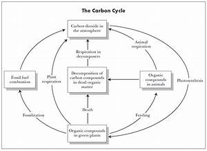 Diagram Of The Carbon Cycle Worksheet Gallery - How To ...