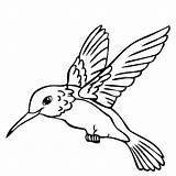 Hummingbird Printable Coloring Pages Animal Bedroom Getcolorings Getdrawings sketch template