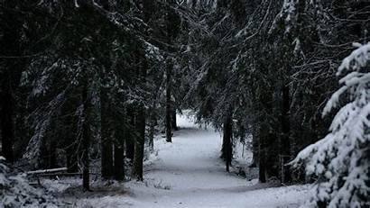 Forest Winter Snow Trees Branches 1080p Background