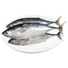 mydin fresh ikan tongkol  kg rudina