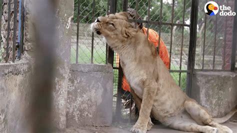 zoo animals experience left