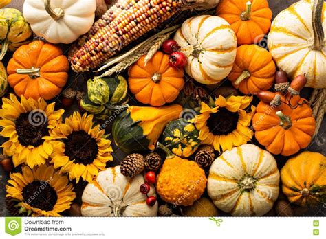 Desktop Fall Backgrounds Pumpkins by Fall Pumpkin Background Images Flowersheet