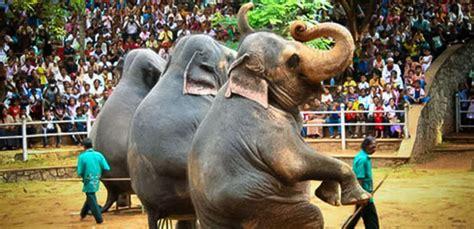 Zoological Garden Zoological Garden In Sri Lanka
