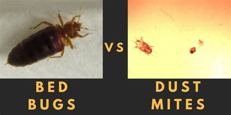 difference  bed bugs dust mites airmid