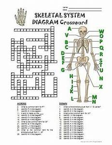Skeletal System Crossword With Diagram  Editable  By