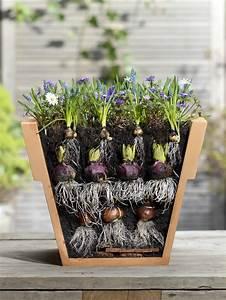 Blumenzwiebeln Im Glas : tulpen im topf treiben heimwerken ~ Markanthonyermac.com Haus und Dekorationen