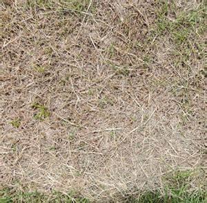 Arrosage Automatique Pelouse : syst me d arrosage automatique irrigation pelouse jardin ~ Melissatoandfro.com Idées de Décoration