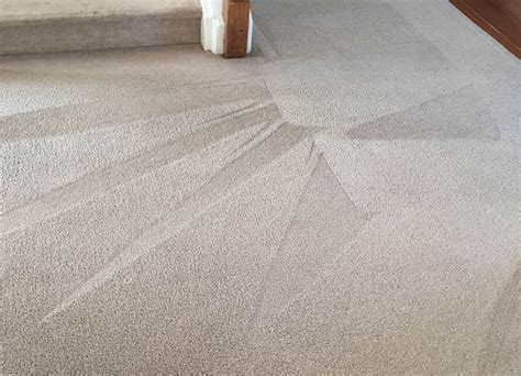 Raleigh Carpet Cleaning Pet Stain Removal  Carpet Repair