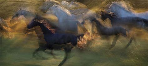 Horse Canvas Art Prints