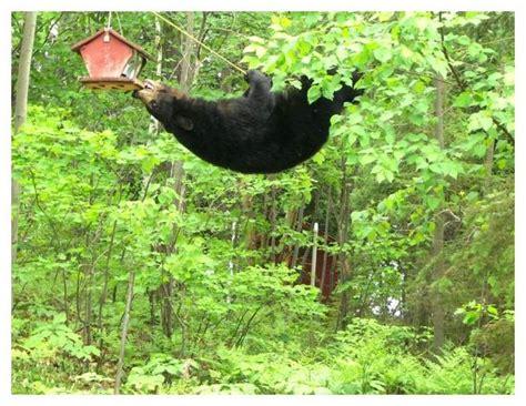 homemade squirrel proof bird feeder plans crazy homemade