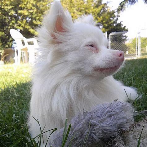 albino dogs prove   dont  color
