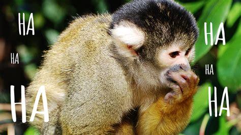 Zoo Jokes Zoological Society Of London Zsl