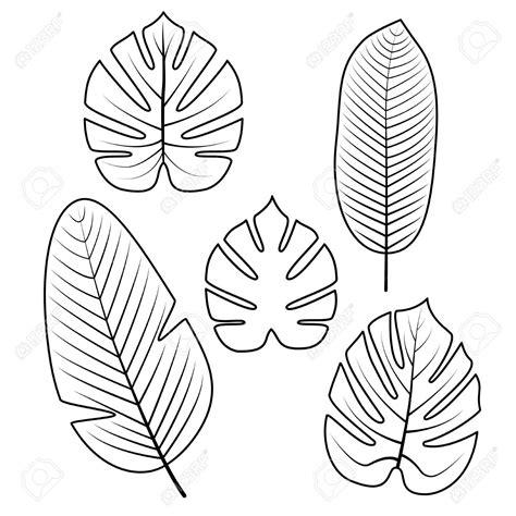 coloriage feuille tropicale blackstonefranks