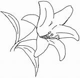 Coloring Flower Lily Printable Pages Lilies Number Paint Printablee Via sketch template