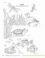 Pond Coloring Printable Habitat Template Pdf Drawings Ftp Fisheries sketch template