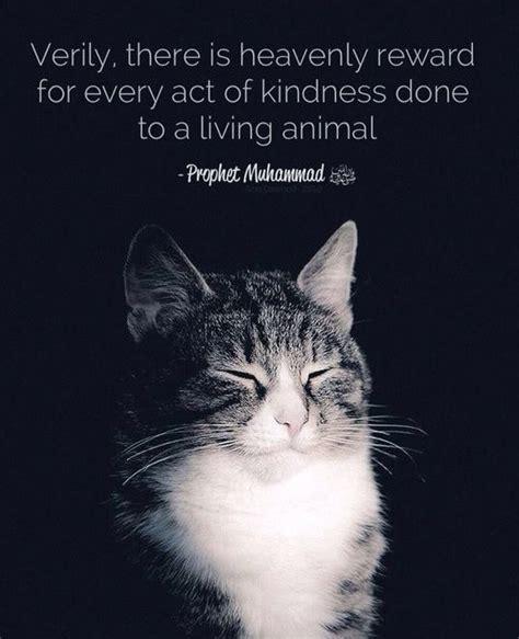 islam faith  unfair  dogs  kind  cats poc