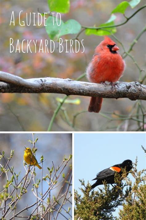 Identify Backyard Birds by Pin By Angela Kennedy On Gardening