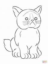 Coloring Grumpy Cat Webkinz Pages Printable Colouring Baby Drawing Cute Print Soon Well Isaac Grump Children Spa Themed Template Popular sketch template
