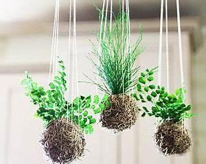 Kokedama Suspendu Home Plants Flowers Pinterest