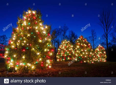 outdoor trees been decorated with