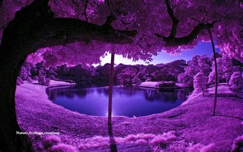 purple hues color therapy pinterest