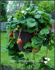 Here's a Fun Way to Grow Strawberries – In a Basket